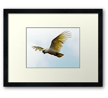 Master of the Air (2) Framed Print