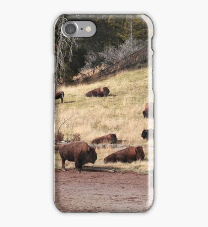 Resting bisons iPhone Case/Skin