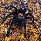 Tarantula by Moninne Hardie