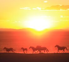 Sunset Run by Gene Praag