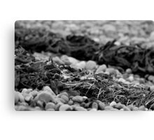 Seaweed on the pebble beach Canvas Print