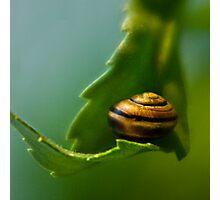Nature's Hammock Photographic Print