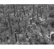 tucson cactus Photographic Print