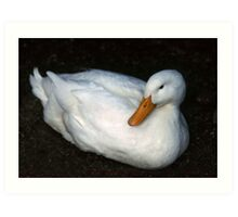 White Duck at rest Art Print