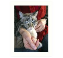 Harry the Cat looking rather contented Art Print