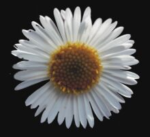 Daisy t by Maree Toogood