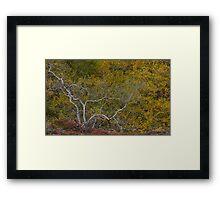 Autumn Colours, Iceland in September Framed Print