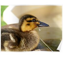 Just A Little Dribble - Rescued Duckling - NZ Poster