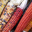 Indian Corn Harvest by Carmen Mandel-Cesáreo