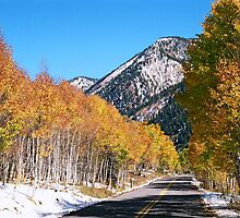 A Drive Through The Aspens by James J. Ravenel, III
