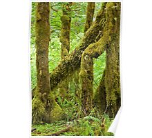 Hoh Rain Forest (9847) Poster