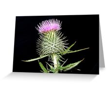 The Flower of Scotland Greeting Card