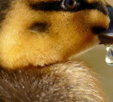 Just A Little Dribble - Rescued Duckling - NZ Sticker