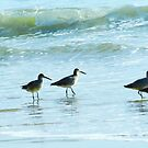 Sandpipers march by Eyal Nahmias