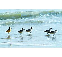 Sandpipers march Photographic Print