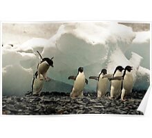Sometimes a Penguin can't help but show off! Poster