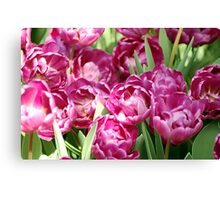 Light Pink Tulips Canvas Print