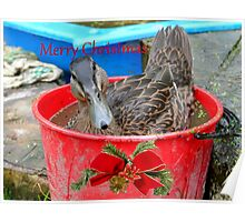 All I Want For Christmas - Rescued Duck - NZ Poster