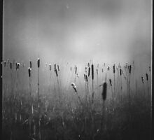 Nevamore by redtree