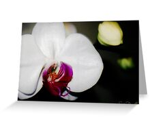 Phalaenopsis Greeting Card