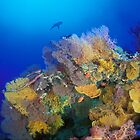 Osprey Reef silhouette by David Wachenfeld