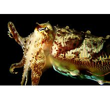Hello Mr Cuttlefish Photographic Print