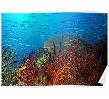 Solomons reef scene Poster