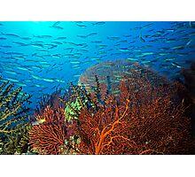 Solomons reef scene Photographic Print