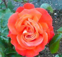 rose bright red by bitsdraw