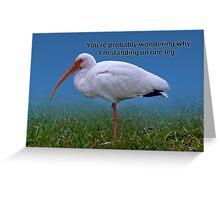 Ibis On One Leg Greeting Card