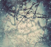 Heart of Winter by Sybille Sterk