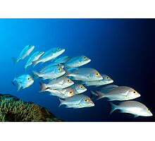 Snappers Photographic Print