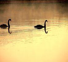 Black Swans by ShutterLight1