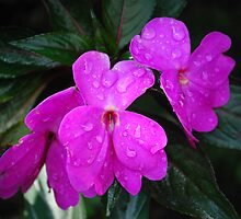 Wet Purple by SteveT