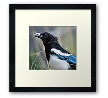 Sing A Song Framed Print