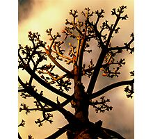 Spirit Tree Photographic Print