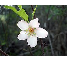 Wild tree flower Photographic Print