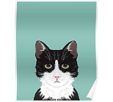 Quinn - Cute black and white cat gifts for cat person and cat lady gifts Poster