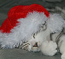 Happy Christmas  From Darcy ! by Colin J Williams Photography