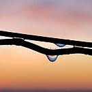 Dew drops by Adri  Padmos