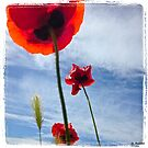 Poppies in the sky by Jean-Luc Rollier