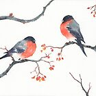 Bullfinches by Paola Cocchetto