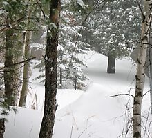 woods during a snowstorm by Matte Downey