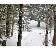 woods during a snowstorm Photographic Print