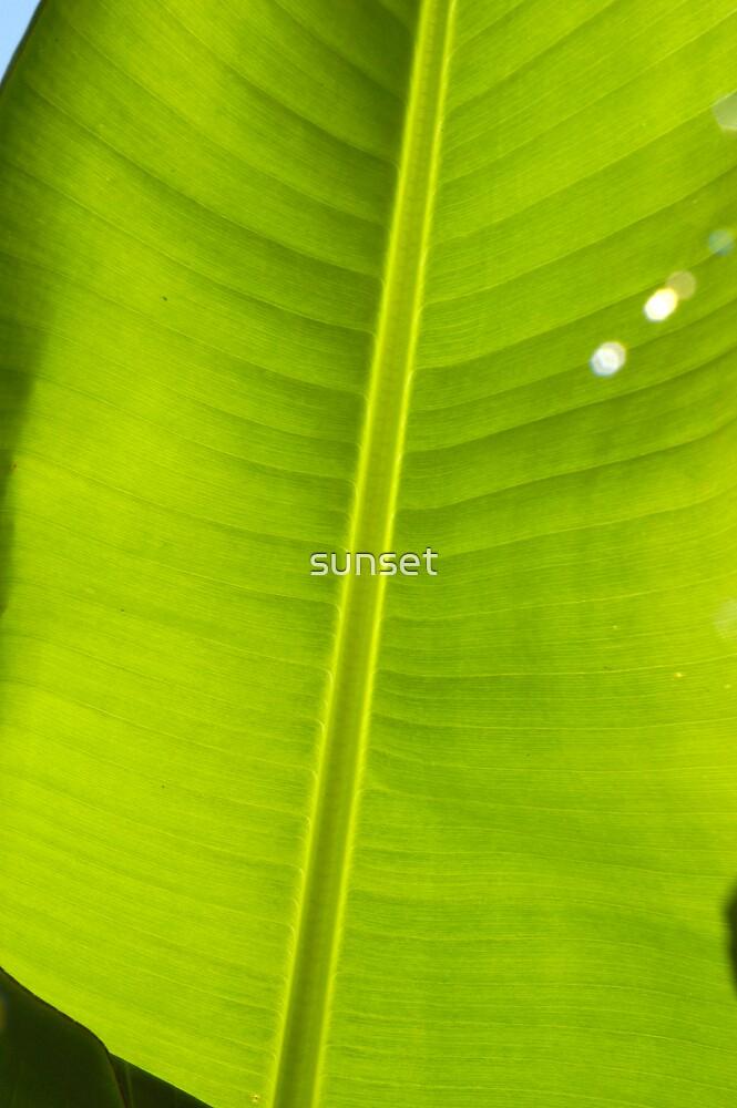 banana leaf by sunset