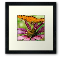 Gulf Fritillary, Butterfly Framed Print