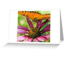 Gulf Fritillary, Butterfly Greeting Card
