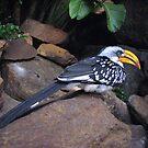 yellow beak by paula whatley
