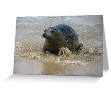 Cornish Seal 4 Greeting Card