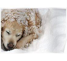 Pup iN snOw Poster